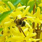 A Busy Bumble Bee Back At Work by Gillwho