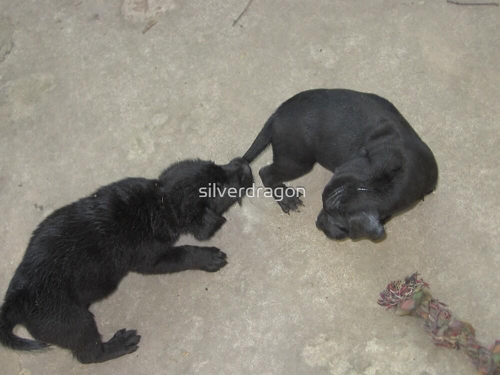 Puppy Tail Tug-O-War by silverdragon