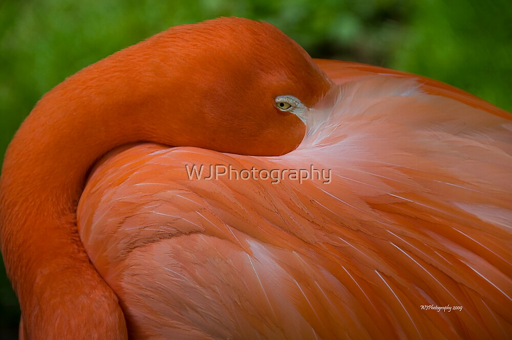 Napping~ by WJPhotography