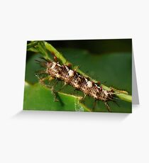 Guess who's coming to dinner? Greeting Card