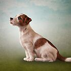 Jack Russell Terrier. Drawing, illustration funny dog by bonidog