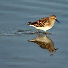 Sandpiper by Virginia N. Fred