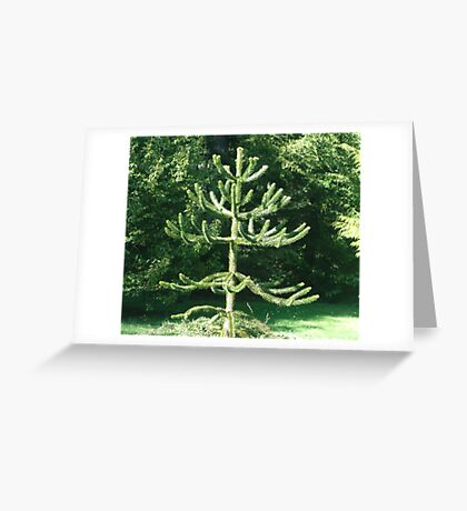 Monkey Puzzle Tree Greeting Card