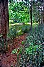 A Trail to Follow by photosbyflood