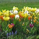 Tulips In The Wind by Linda Miller Gesualdo
