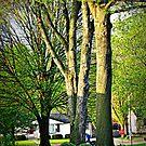Trees In The Neighborhood by Linda Miller Gesualdo