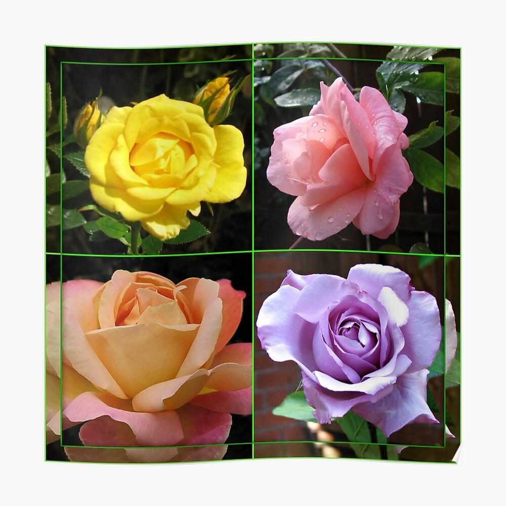 Rosen-Collage im gespiegelten Rahmen Poster