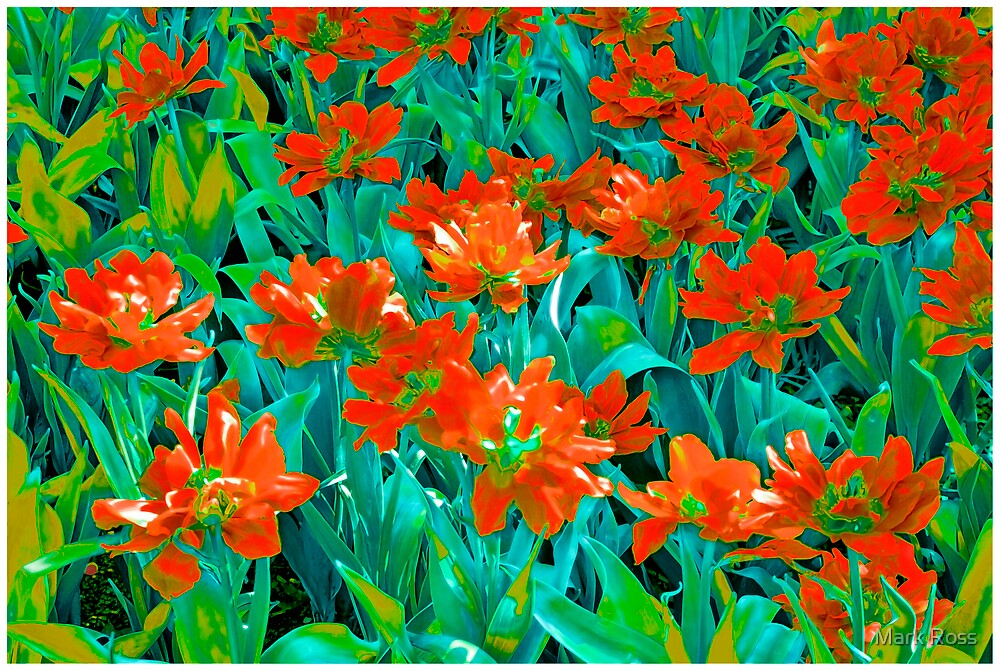 Red Flowers #2 by Mark Ross