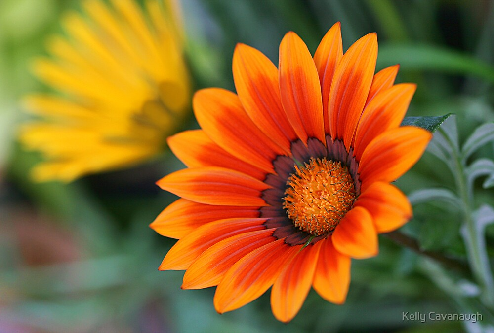 Garden Sunshine by Kelly Cavanaugh