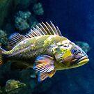 Grumpy Rockfish by Bonnie M. Follett