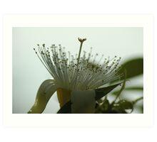 Boab Flower Art Print
