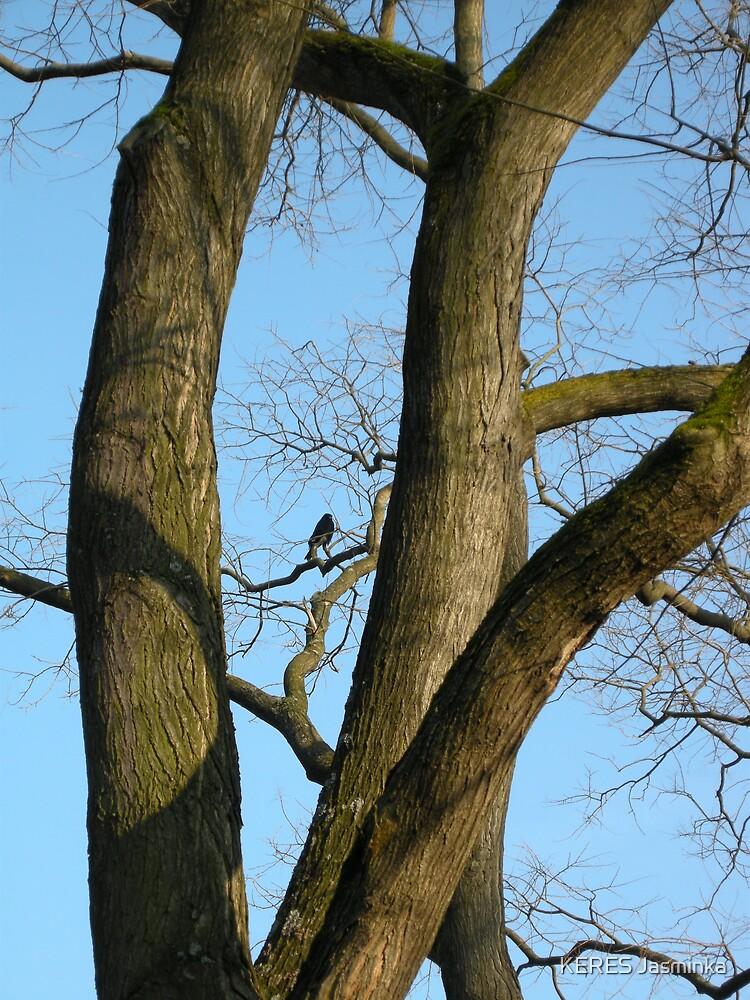dark crow in the tree by KERES Jasminka