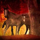 Brumbies Five by Clare Colins