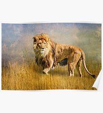 King of The Serengeti Poster