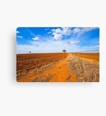 Lookin up along fence line Dookie.. Canvas Print