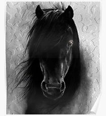 WILD HORSE  Poster