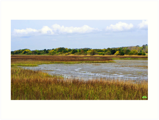 Marshland in Color by daniels