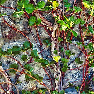 Climbing Vines by JudyPalkimas