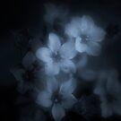 Spleen by Philippe Sainte-Laudy