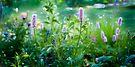 Wildflowers in Springtime by DonDavisUK