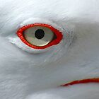 Seagle Eye by AJM Photography