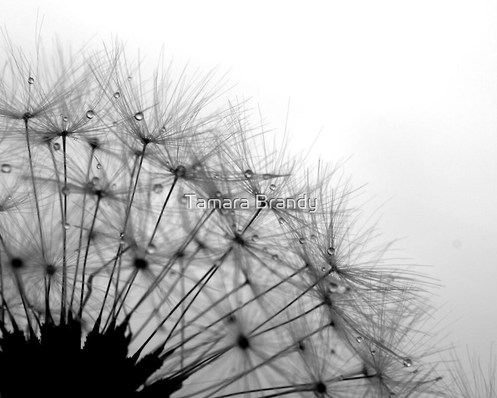 Dandelion Drops by Tamara Brandy