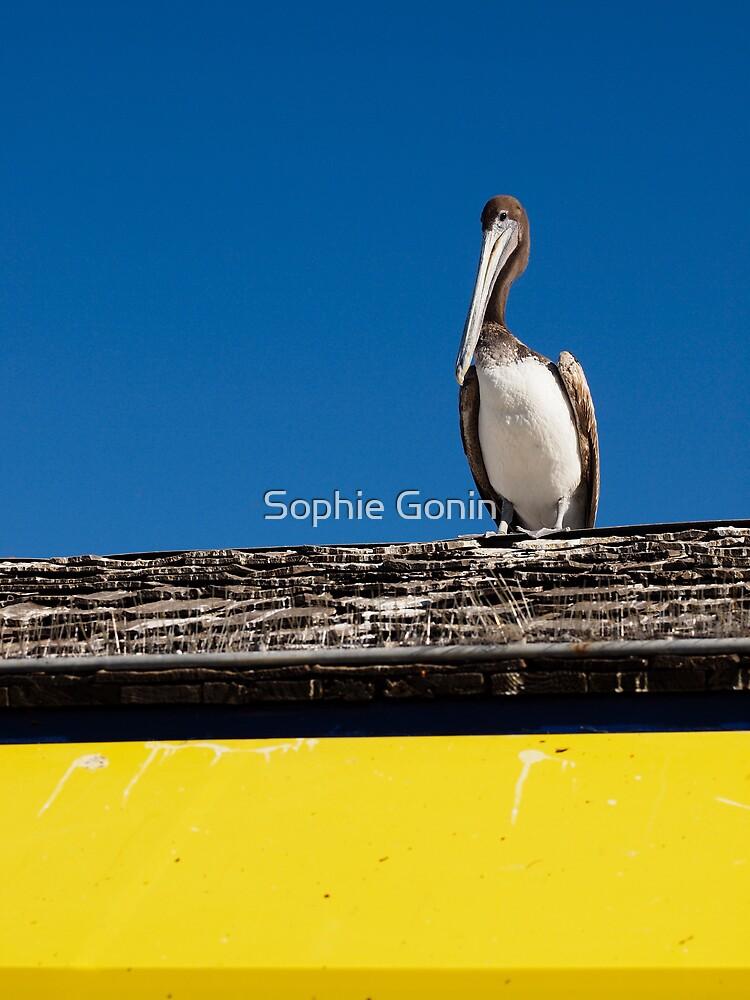 Early Bird by Sophie Gonin