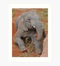 Elephant's Time Out  Art Print