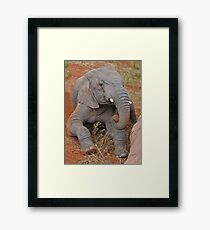 Elephant's Time Out  Framed Print