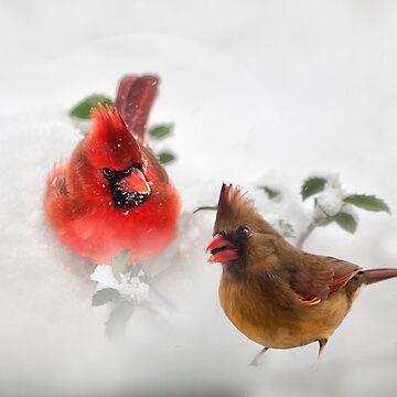 Mr. and Mrs. Cardinal by kdxweaver