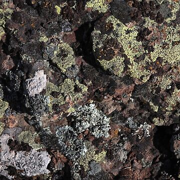 Basalt with Lichen by feralbeagle