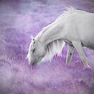 Fairytale pony by Mitch  McFarlane