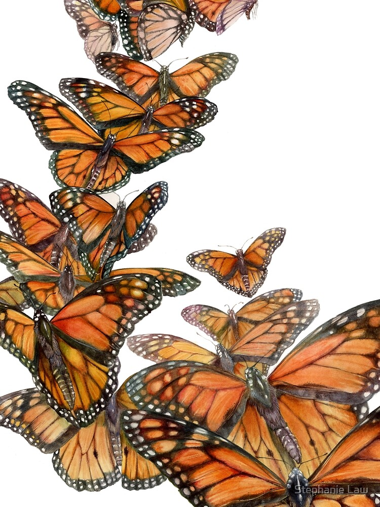 Monarch Butterfly Flight by stephlaw