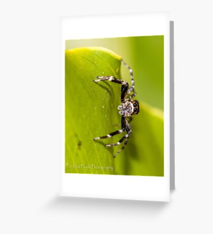 Morning Spider Greeting Card