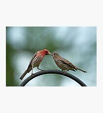 Beak to beak Photographic Print