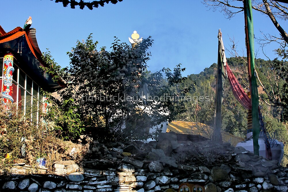 morning offerings. tso pema, india by tim buckley | bodhiimages
