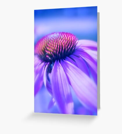 Cone Flower in Pastel Greeting Card