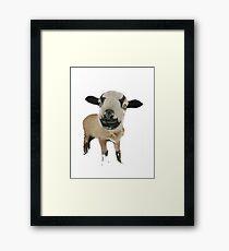 Cameroon Sheep Framed Print