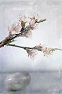 Peach Stone by Karri Klawiter