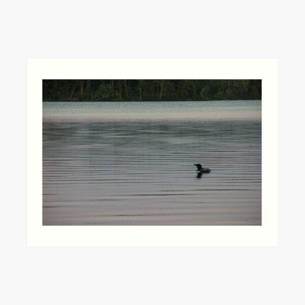 Loon on the Lake Art Print