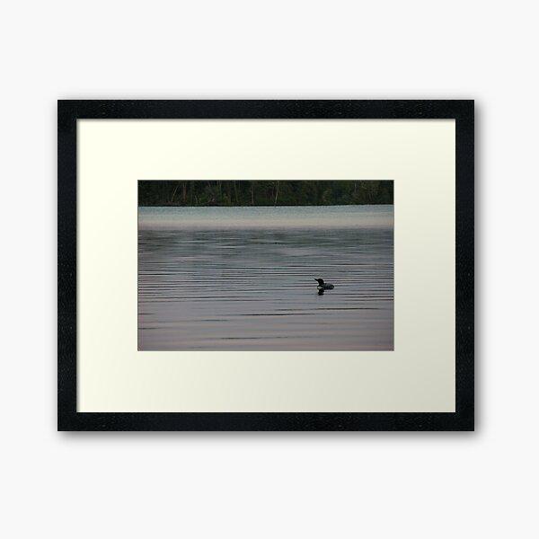 Loon on the Lake Framed Art Print