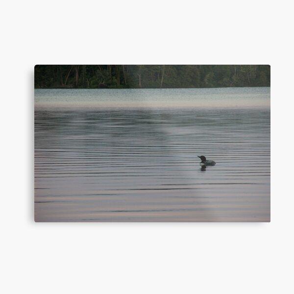Loon on the Lake Metal Print
