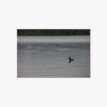 Loon on the Lake Art Board Print