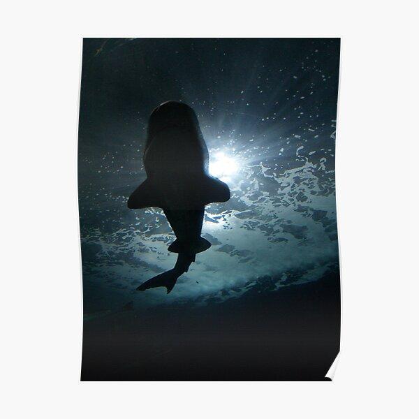 Shark Shadow I Poster