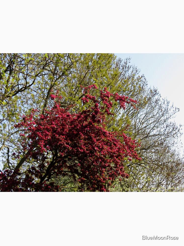 Baum mit roten Blüten von BlueMoonRose