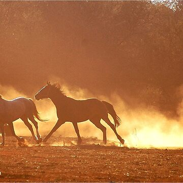 """HORSES IN SILHOUETTE"" at DUSK, RUNNING WILD,RUNNING FREE by mags"