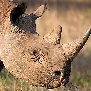 Black Rhino Profile by Mytmoss