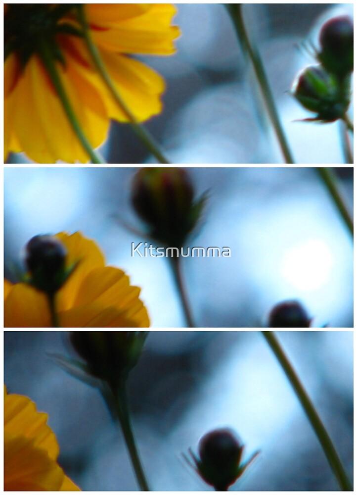 Cosmos by Kitsmumma