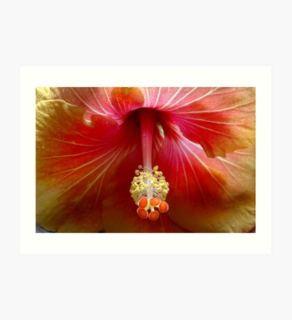 Hibiscus, Flower Art Print