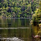 The Gordon River, Tasmania by Christine Smith
